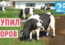Farming Simulator 19 - КУПИЛ СТАДО КОРОВ - Фермер в совхозе РАССВЕТ # 25